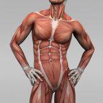 Muskelentzündungen Leukozyten