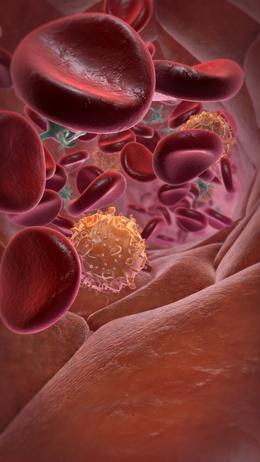 Blutbahn mit Erythrozyten, Thrombozyten und Leukozyten