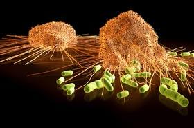 Makrophag im Immunsystem