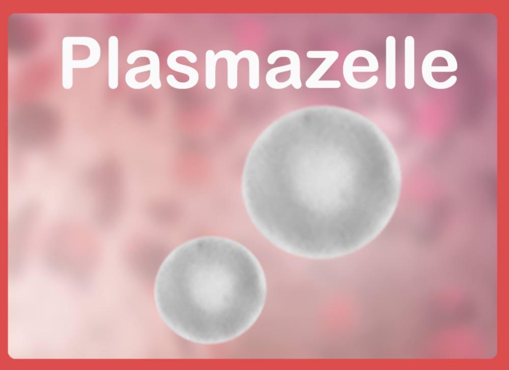 Plasmazelle Definition, Bildung und Aufgaben