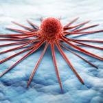 chronisch myeloische Leukämie