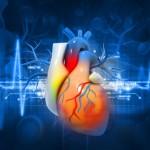 Herz im Körper