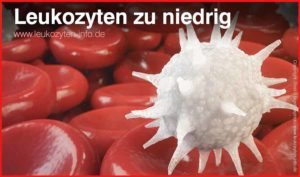Leukozyten zu niedrig