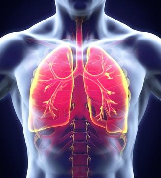 Lunge Mensch